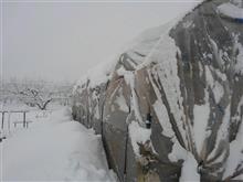 ハウスの雪かきに
