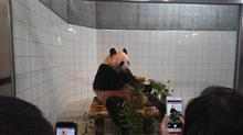 アドベンチャーワールドにパンダ見に行って来ました♪