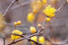 新春♪初花鳥撮り♪