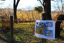 ロウバイの小径2018(府中郷土の森博物館)