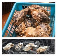イベント: 「 RP- style九州支部」牡蠣オフ2018in糸島