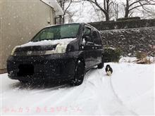 雪犬▼・ω・▼ ワンッ
