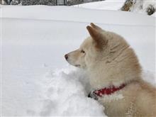 雪山 遊ぶのは最高!住むのはどうだろか…