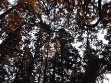 きょうは夕方に森林浴してきた(❛︎ᴗ❛︎)✧︎