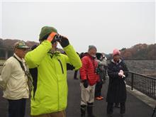 那須・矢の目ダム:冬のバードウォッチングへ行ってきました。