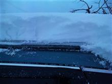 何年かぶりの大雪