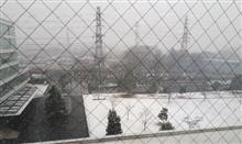 今日は八王子も雪が降ってます(。>д<)