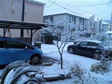 2018.1.22.雪だねぇ!