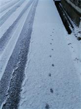 今季の当地の初雪