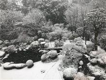 大雪です!(大汗)