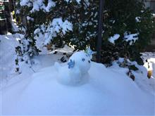 雪降ったー