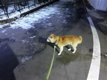 極寒のお参歩