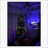 クリスマスツリーの飾り付け完 ...