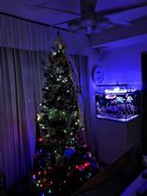 クリスマスツリーの飾り付け完了!