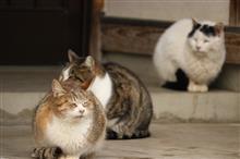 冬の猫寺へ、癒しを求めて🐱