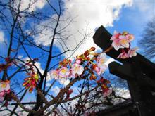 長崎 西山神社 元日桜 御朱印☆彡