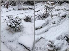 雪降って雪うさぎ作った(◦´꒳`◦)❄️