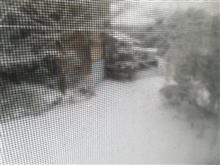 福岡県地方大雪‼