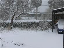 雪降りの月曜、おはようござりす。