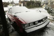 また 雪ですよ