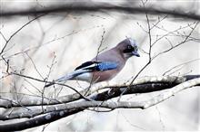 近場の冬の野鳥