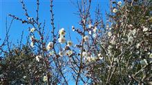 ☆春のきざし~✨☆