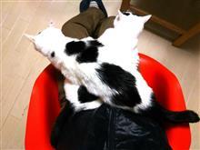 ・・・X Cat・・・