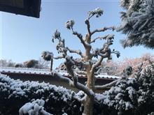 2日連続の積雪は徳島市では珍しいです。