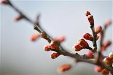 春はもう、すぐそこ ( ● ´ ー ` ● )
