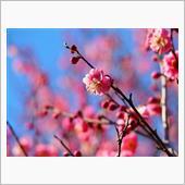 春がそこまで