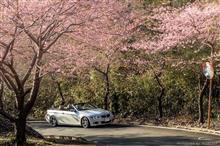 ブルー・ピンク・オレンジ・パープル、ちょっぴり春色西伊豆ドライブ