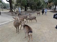 6日目 奈良公園