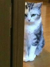 猫バンバン     ( ̄□ ̄;)!!