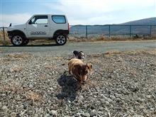 🌴愛犬とドライブ~🐶🐶💕