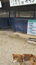 柴犬レオ@くつわ池公園の靴はアジダスとアダムスのロックワン2U(^^)v