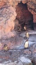 ペンギン日和〜大洗