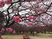 春に向けて始動