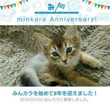 にゃんカラ!シンタロウ記念日&祝・みんカラ歴8年!