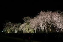2014年 角館の桜