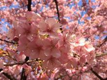 春ですね〜🌸