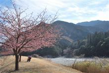 桜と梅を覗きに東紀州を南下