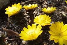 春になりました!