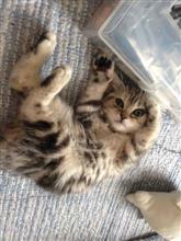 本日未明、僕の愛猫のスコが永眠しました....