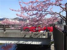桜~SAKURA~ 2018.3.11