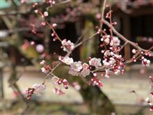 今日は京都で観光