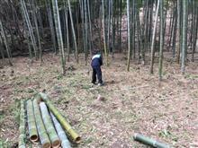 竹藪の掃除