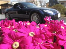 春は近い(^^)