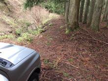 千葉のとある林道2