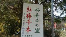 福寿草と紅梅