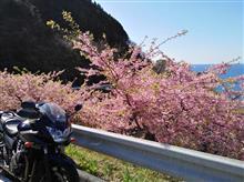 『バンディット』 春の便り